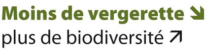 Moins de vergerette – plus de biodiversité